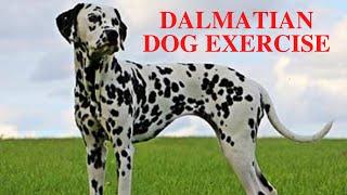 Dalmatian Dog Exercise [Needs and Ideas]
