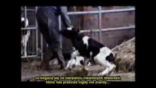 Historia Ludzi, którzy ryzykują wszystko aby ratować zwierzęta