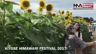 KIYOSE HINAWARI FESTIVAL 2017