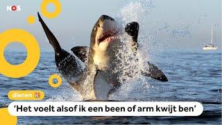Mysterie: Waar zijn alle witte haaien gebleven?