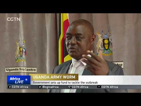 Uganda sets up fund to mitigate, as pests affect 20 districts