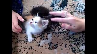 Перепуганные двое котят