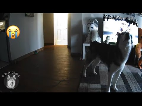 What do dogs do when they're home alone?