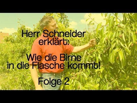 herr-schneider-erklärt:-wie-die-birne-in-die-flasche-kommt!