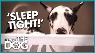 How to Keep a Dog Off the Marital Bed | It's Me or the Dog