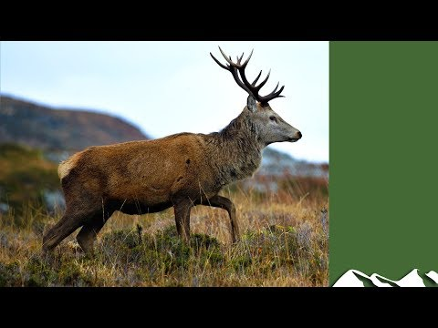 A Year In The Life Of Red Deer, Part 4