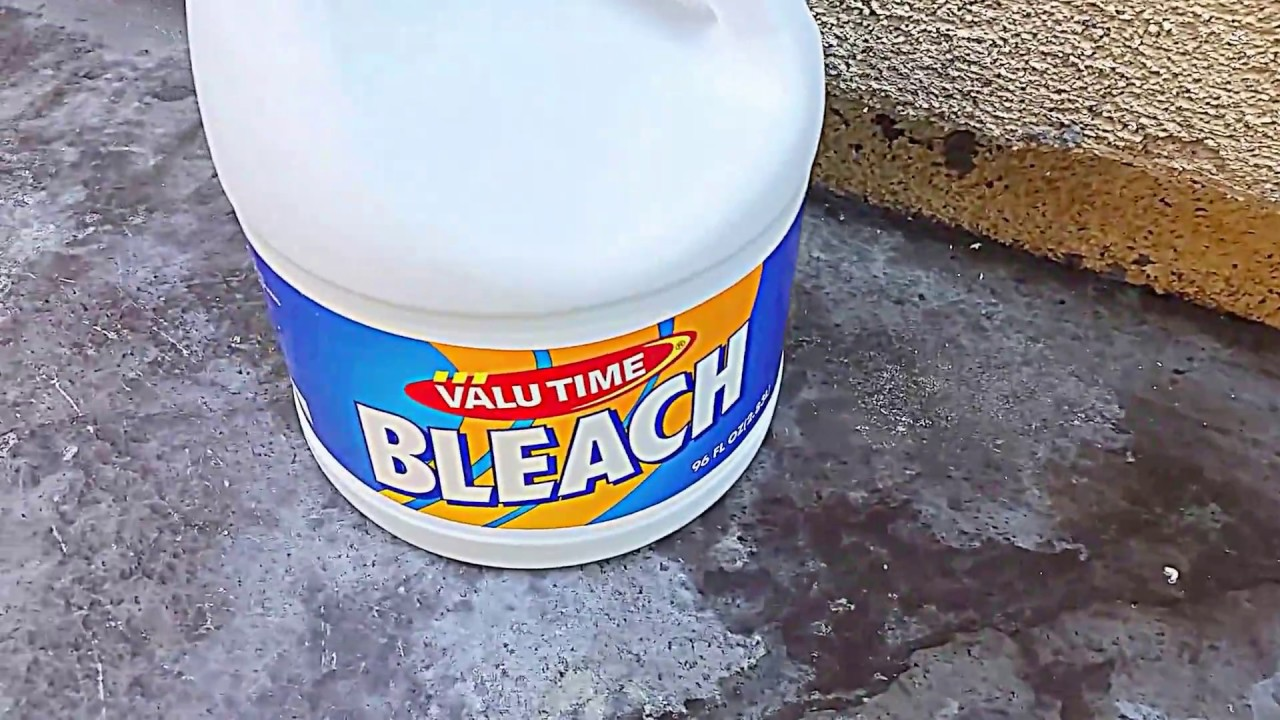 Kill Maggots With Bleach