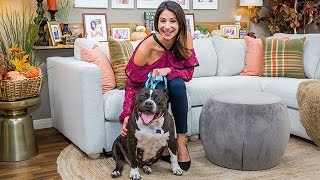 Adoption Ever After - Bella - Home & Family