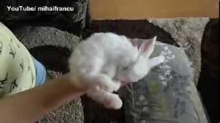 Маленький кролик - спящий. Baby Bunny Sleeping