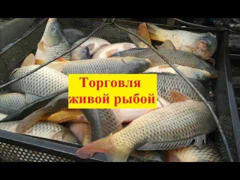 Реальный заработок, личный опыт   торговля рыбой