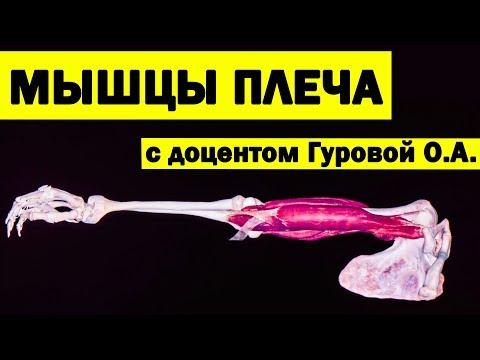 Мышцы плеча | 3D Анатомия человека [3D][4K]✅