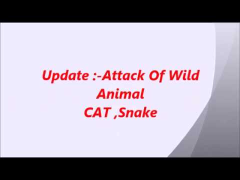 cat attack , poultry farm ,Update