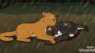 Пестролистая и Огонёк, Коты Водители: Для Неё Он Просто Лучший Друг