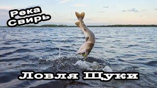 Ловля щуки. Необычная рыбалка в Ленинградской области