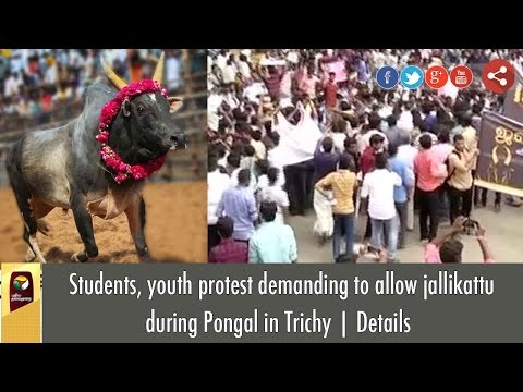 Students, youth protest demanding to allow jallikattu during Pongal in Trichy | Details