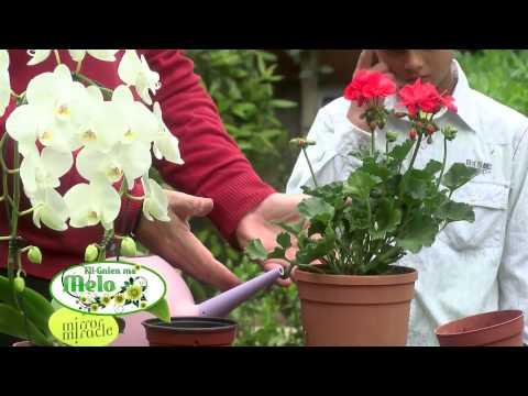 Fil-Gnien ma' Melo (Programme from Derek Garden Centre with Kids 1) / 2014