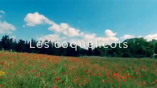 Les coquelicots de Velaux