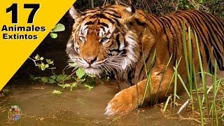 17 Animales Extintos en los últimos 50 Años