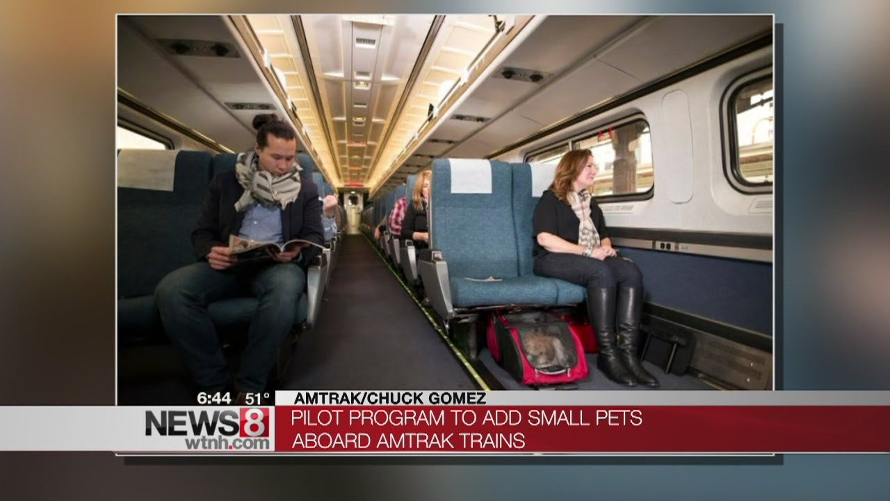 Small pets now allowed on Amtrak trains