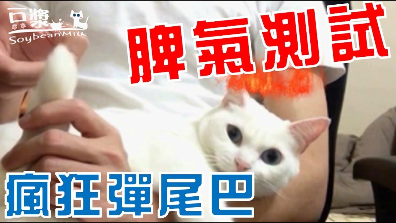 【豆漿 - SoybeanMilk】豆漿脾氣大測試!! 彈尾巴來了 - YouTube