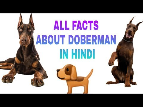 Doberman dog breed info in hindi