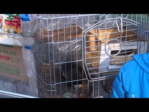 Squirrel doing Back Flips in Beijing