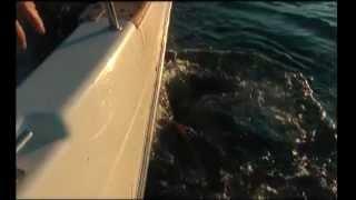 Рыбалка в Баренцевом море.Гигантский палтус.avi
