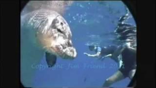 Hawaiian Monk Seal R307 at Molokini Island Maui Hawaii .