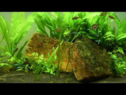 Aquarium Aquatlantis Elegance 120