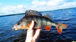 [РВ] ОКУНИ САМИ ПРЫГАЮТ В ЛОДКУ! Супер рыбалка на Рыбинском море. База «Черкасово»