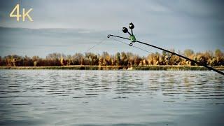 Ход Донского рыбца сырть Рыбалка в ноябре