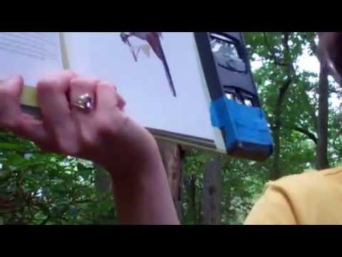Summer Explorers' Camp The Great Swamp Group 4 July 8, 2015