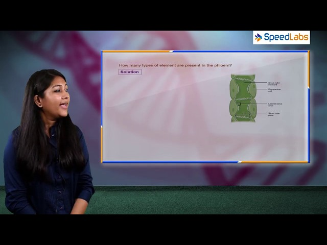 NCERT Solution for Class 9th Biology   Tissue   Q6