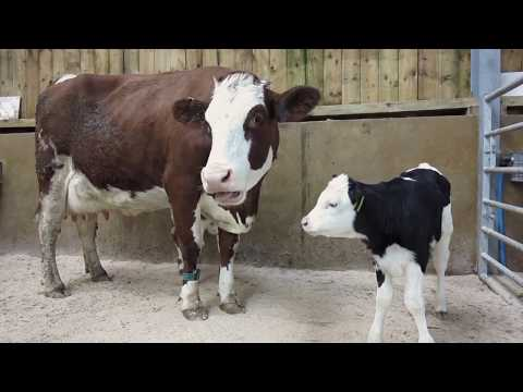 Help us start a dairy farming revolution