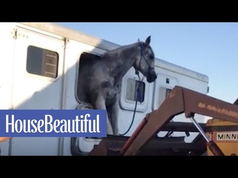 Watch This Horse Escape From a Trailer | House Beautiful