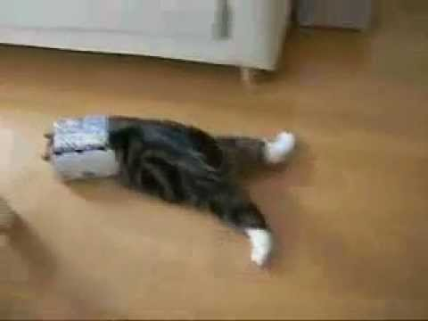 Funny Cute Cat… Stupid Cat