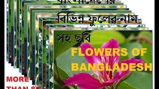 Flowers Of Bangladesh: Top Ten X Ten Most Beautiful Flowers ( বাংলাদেশের ৮০ টি ফুলের নাম সহ ছবি  )