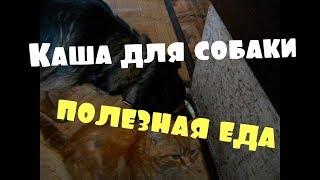Каша для собаки // Полезная еда