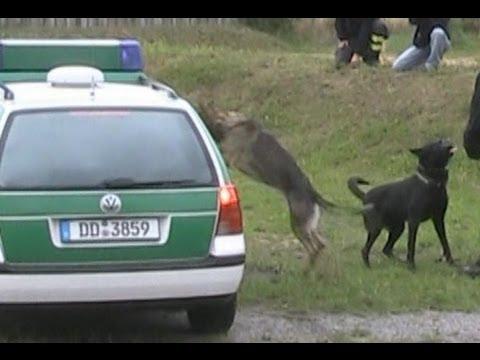 Vorführung Polizeihunde bei 125-Jahrfeier FF Dresden-Weixdorf