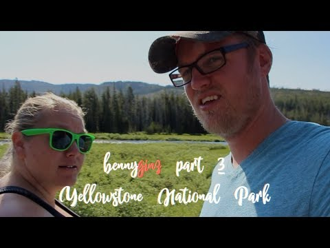 Yellowstone - first time seeing a BEAR!!!!