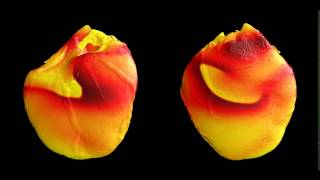 Simulation of electrical activity in the heart during fibrillation (with comparison with experiment)