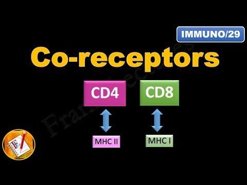 Co-receptors CD4 and CD8 (FL-Immuno/29)