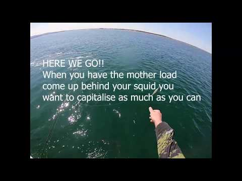 Crazy Squid, Flathead And Gummy Shark Fishing At Port Welshpool