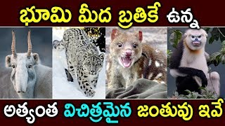 Top 10 Strange Animals On Earth  Wired Animals On Earth  Vip Telugu