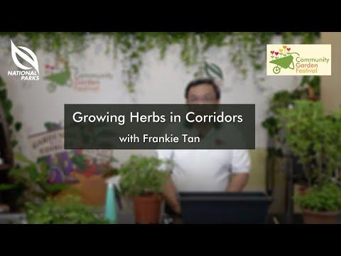Growing Herbs In Corridors | Community Garden Festival 2020