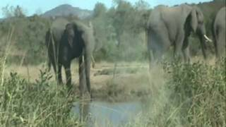 Steve Kekana - All I need (Is Right Here in Africa). Southern african vacation