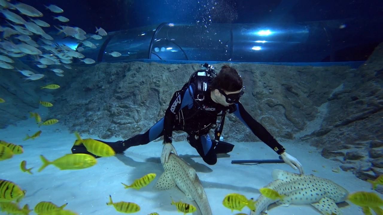 Особенности дайвинга в океанариуме