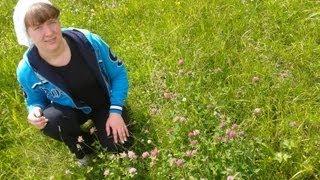 видео Как сушить лекарственные растения