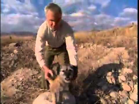 Dog Breeds |  Border Terrier