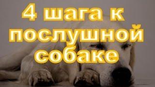 Послушная собака - это легко! 4 шага к послушанию вашей собаки!(Бесплатный курс по дрессировке http://www.dres.in.ua/gaf/readingroom/literarycatalogue/gde-i-chto/dressirovka-video-kurs.html 00-01: Что такое послушная., 2014-12-11T09:01:18.000Z)